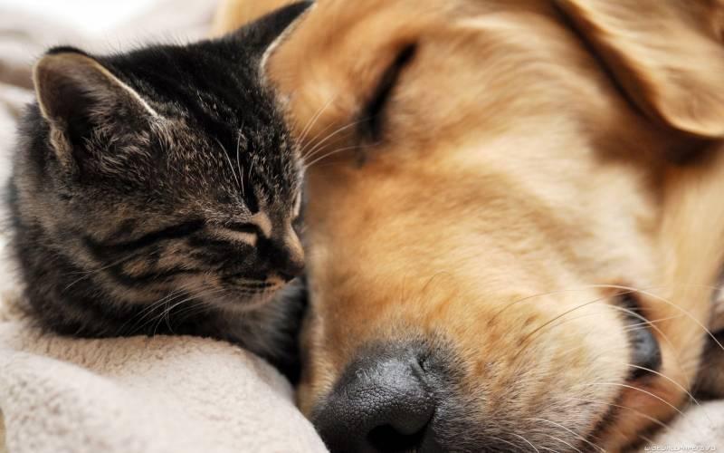 Умнее кошки или собаки: точку в споре
