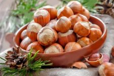 Фундук – как вырастить на даче
